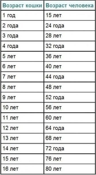 жизни кошек породам сиамских таблица по продолжительность